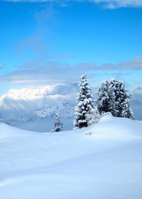 Contrasto alpino di Mauro Bortolin