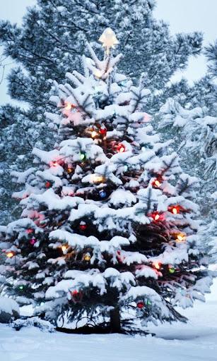 クリスマス ツリー壁紙