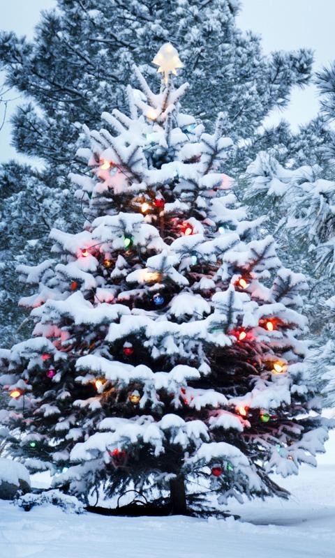 live christmas tree wallpaper screenshot - Live Christmas Tree
