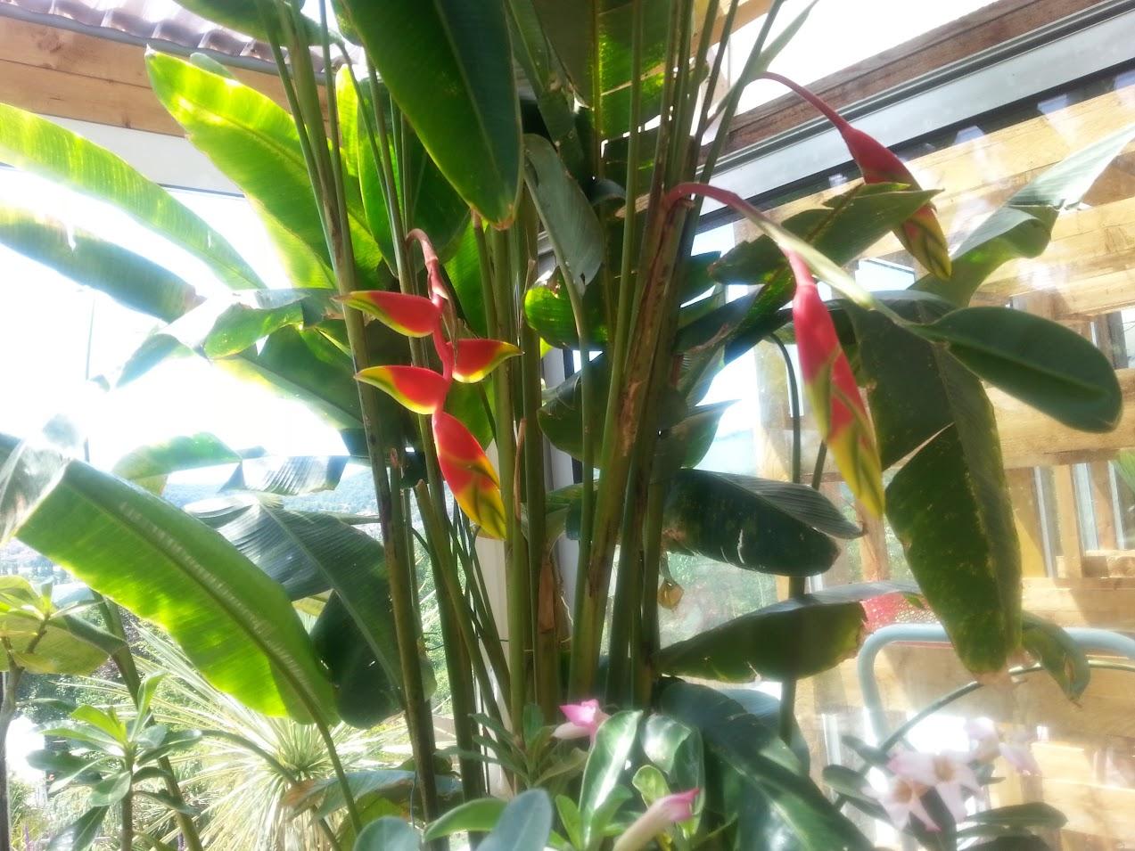 floraisons du mois - Page 26 FLC_XH-4HWrE2W3Zq20jEYDhZmW_OvslNYgPRzKYcR2Y=w1274-h955-no