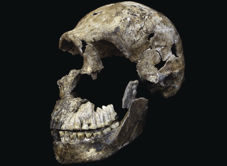 """Neo"" skull of Homo naledi from the Lesedi Chamber. Picture: JOHN HAWKS, WITS UNIVERSITY"