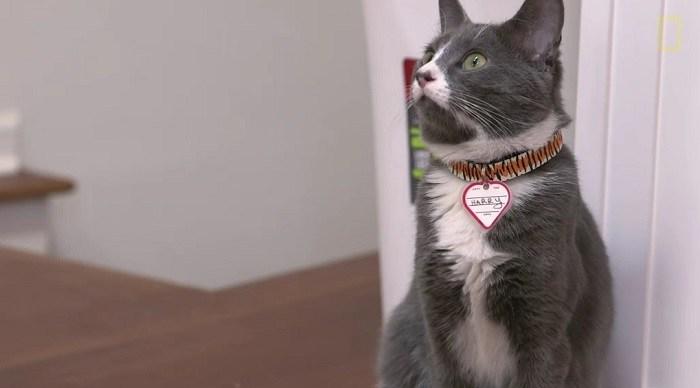 ผลการค้นหารูปภาพสำหรับ ใช่เสียงกับแมว