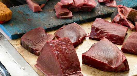 Veterinarios piden que les consulten para evitar intoxicaciones alimentarias