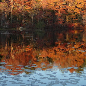 Autumn leave waterpainting by Alan Cline - Landscapes Waterscapes ( water, autumn, foliage, fall, leaves )