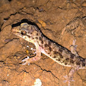 Brook's gecko