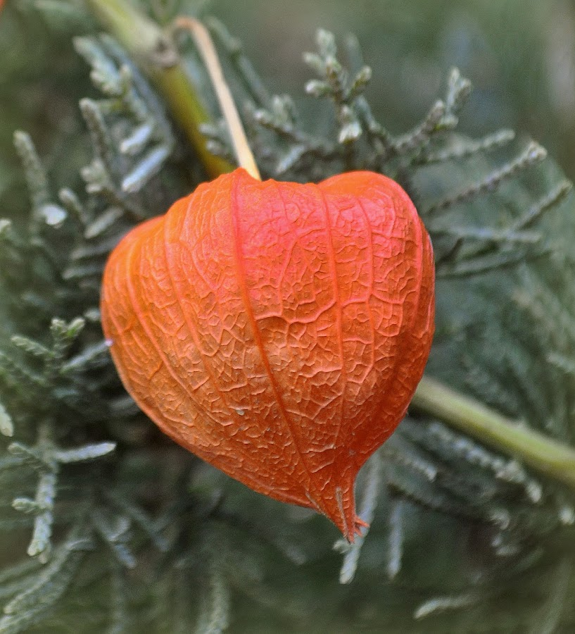 by Mike Roth - Nature Up Close Other plants