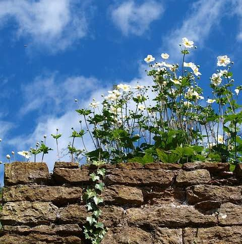 Picture of natural stone wall