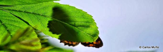 Photo: Hoja y mariposa (cabecera 1)