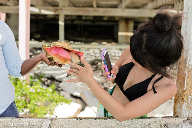 Things to Do in Turks and Caicos - Pet a Conch!