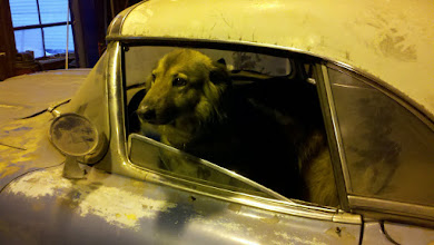 Photo: Andy's 'Lumber Yard Dog' Glupia sits in Andy's 1959 Corvette to supervise work on the medals...