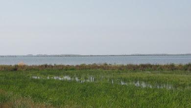 Photo: Rice field right next to the Deltebre lagoon - fishermens' platforms run along the horizon