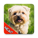 Cute Dogs Memory Matching Game icon