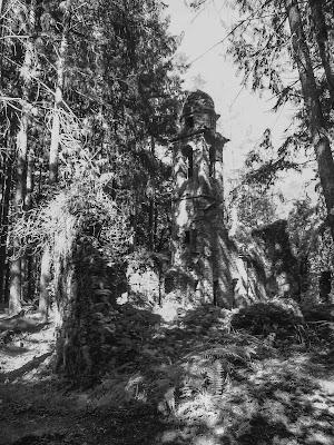Segreti nel Bosco di Francesca Maifredi ©