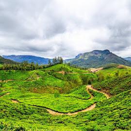 Tea Plantations at Munnar by Valliappan Chellappan - Landscapes Prairies, Meadows & Fields ( plantations, green, india, tea, munnar )