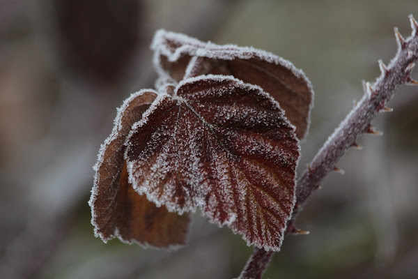 di ghiaccio vestite di Airan