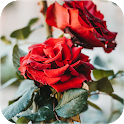 Rose Wallpaper Floral Flower Background Red Roses icon