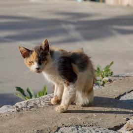 Street Kitty by Karin Wollina - Animals - Cats Portraits ( small, street, ginger, cat, animal, kitty )