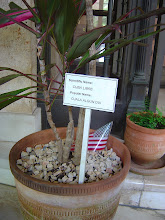 Photo: when will cuba be free? soon, I hope. plant at u.s. ambassador's residence, havana, cuba. Tracey Eaton photo.