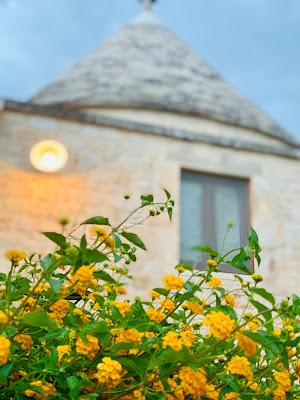 Fiori gialli di giorgia_palmarini
