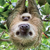 Download Sloth Wallpapers Hd Free For Android Download Sloth Wallpapers Hd Apk Latest Version Apktume Com