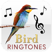 Bird Morning Ringtones
