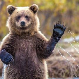 Hello by Irvan Junizar - Animals Other Mammals ( outdoor, mammals, animal, bear, animals, portrait, wild, wildlife,  )
