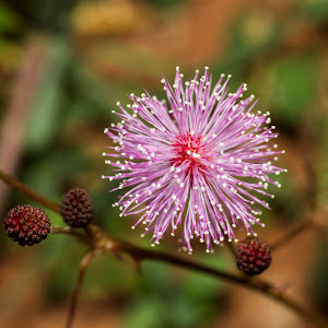 Flower 002.jpg