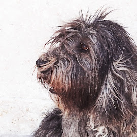 Fluffy by Ana Paula Filipe - Animals - Dogs Portraits ( bread, color, portrait, brown, dog )