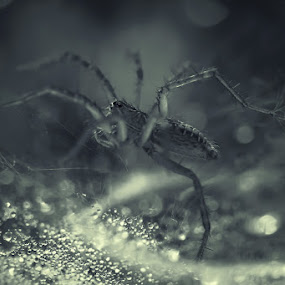 playing in the morning by Bagus Kusumawanto - Animals Insects & Spiders