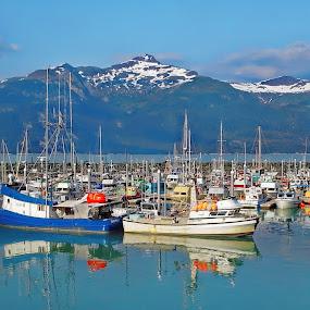 Haines Harbor Alaska by Rev Marc Baisden - Transportation Boats ( travel adventure, charters, haines alaska, boats, alaska, travel,  )