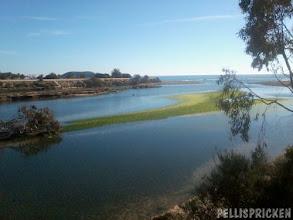 Photo: En grön ö har bildats mitt i flodfåran, jag tror det är alger för det ser liksom kladdigt ut