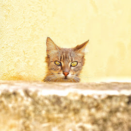 by John Bonanno - Animals - Cats Portraits