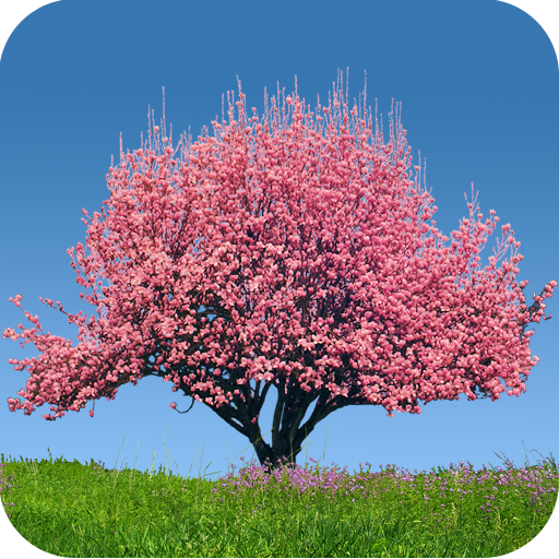 Spring Trees Live Wallpaper Apps On Google Play