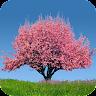 com.adermark.springtreesfull