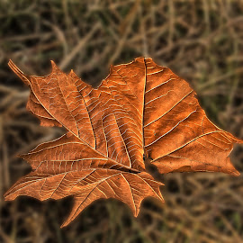 Twee bruin Blare by Elna Geringer - Nature Up Close Leaves & Grasses