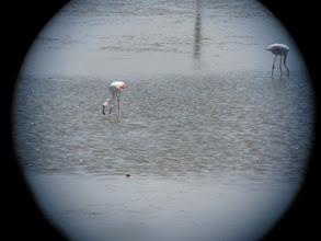 Photo: Flamingos viewed through telecope