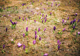 Photo: Magaslati tavaszhírnökök
