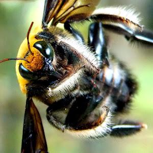 Black Wasp 11.jpg