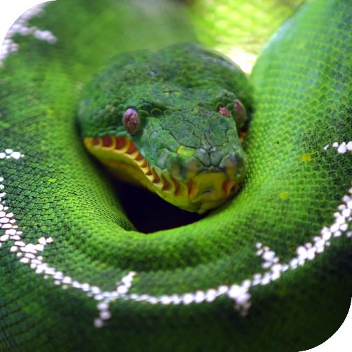 Python Live Wallpaper Apps On Google Play