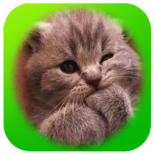 Funny Cute Cat Expression - náhled