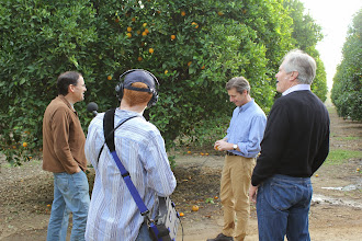 Photo: Bob Knight, at left, working to preserve orange groves