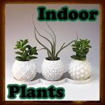 Indoor Plants 66.3