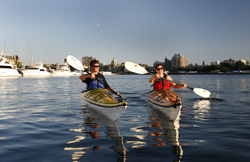 See marine life close up while kayaking in Victoria harbour.