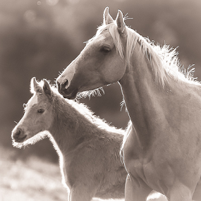 Palomino mare & her foal by Glenys Lilley - Black & White Animals ( mare, palomino, horse, cute, foal )