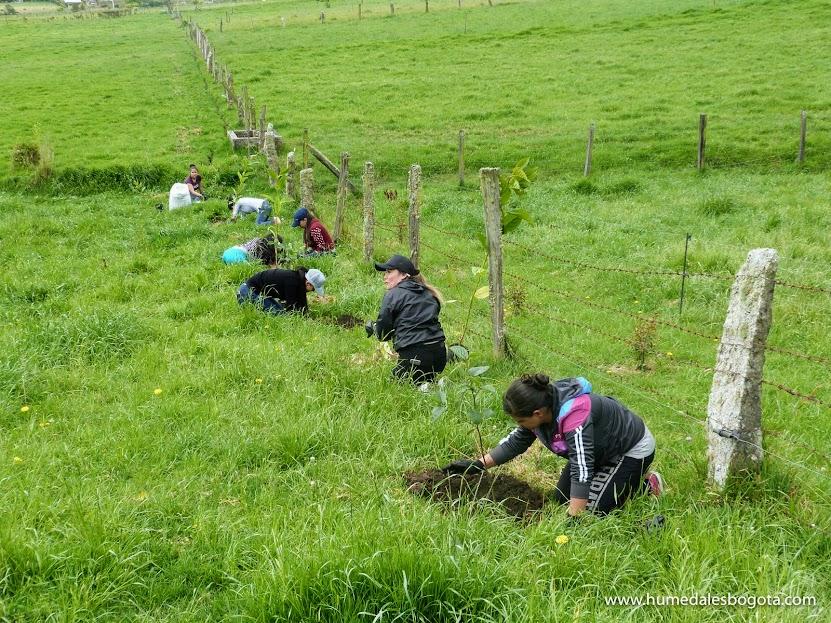 Jornada de plantación en La Calera Cundinamarca