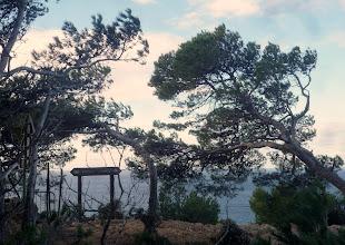 Photo: Le sentier, les pins et la mer : Le littoral.