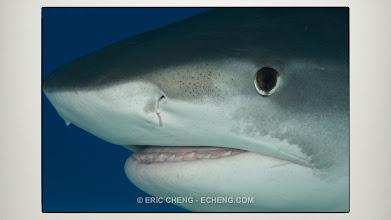 Photo: Macro lens tiger shark!