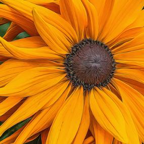 by Tracy Riedel-Dorsch - Flowers Single Flower (  )