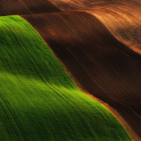 Field graphics by Jozef Micic - Landscapes Prairies, Meadows & Fields ( field, contrast, green, lines, brown, light, fields )