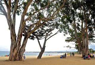 Photo: 19. This is Monterey State Beach, just a few blocks away from the wharves and as you can see here, there are some large stately eucalyptus trees that provide some shade.